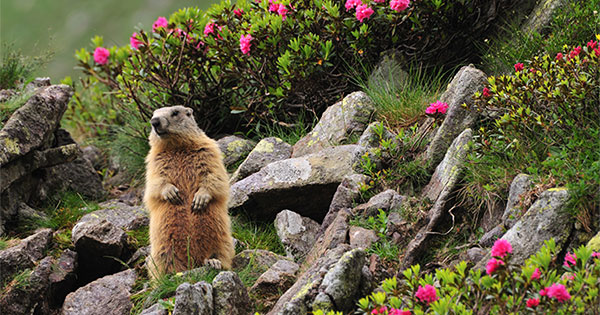 No Matter What the Groundhog Says, Here are 5 Reasons to Sell Before Spring!   Keeping Current Matters